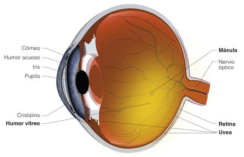 afectación de la diabetes en el ojo de la