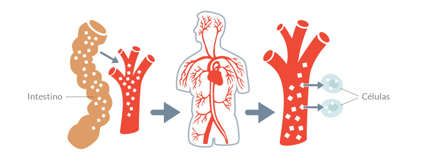 hipoglucemia normoglucémica sin diabetes